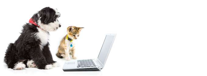 black and white puppy with orange tabby kitten looking at laptop