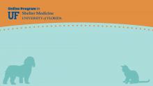 Zoom Virtual Background - Blue with Online Program in Shelter Medicine Logo