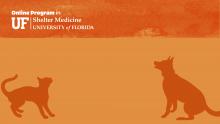 Zoom Virtual Background - Orange with Online Program in Shelter Medicine Logo